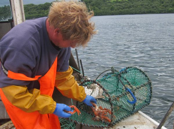 Ian taking out nephrops