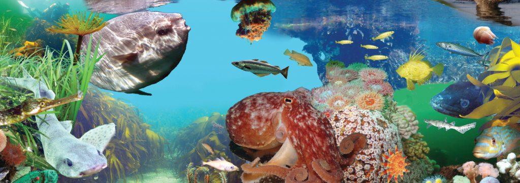 Arrans Marine Life
